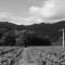 Keep, Calistoga, Napa Valley, Shypoke, 2015